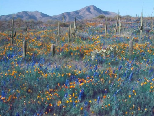 Digital painting of spring in the Sonoran desert near Tucson, Arizona