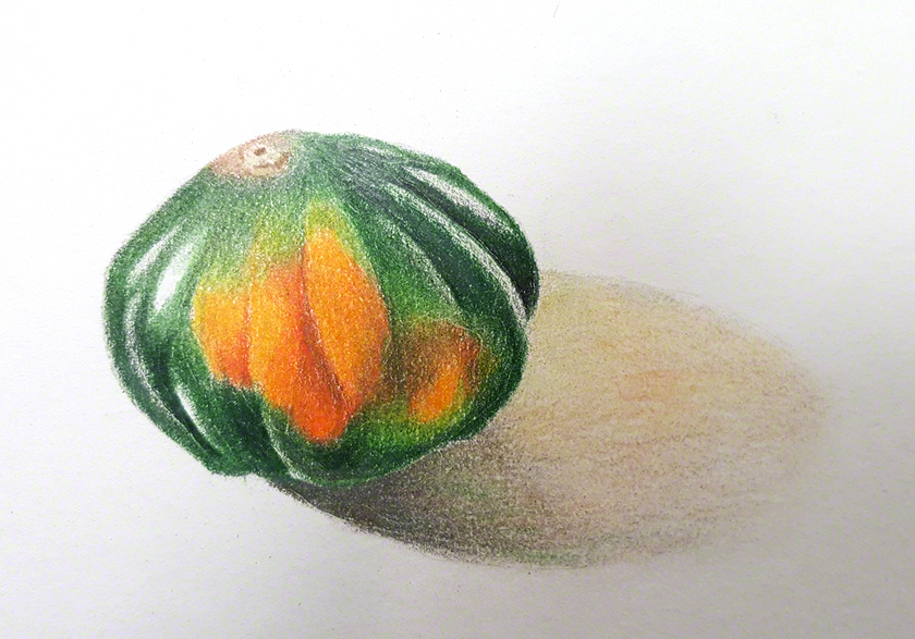 Colored Pencil drawing of an acorn squash
